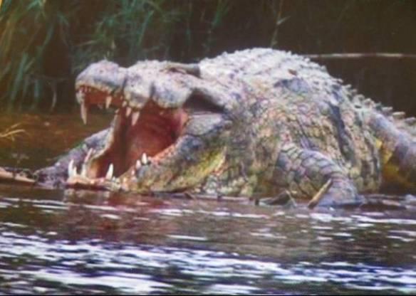 Crocodilo Gigante Perdido