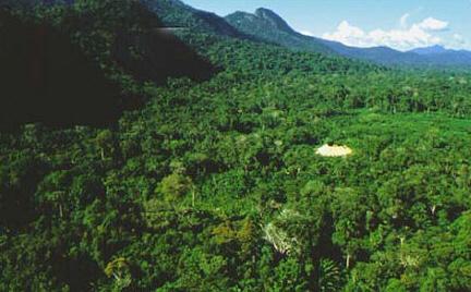 Fonte da Internet Eterna em algum lugar da Floresta Amazonica